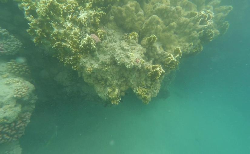2015 / Египет. День четвёртый. Кораллово-рыбный.